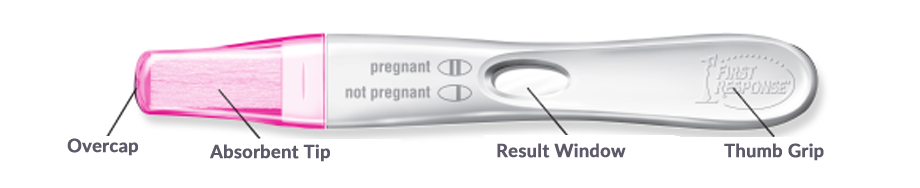 First Response Early Result pregnancy test with easy to read results and curved handle